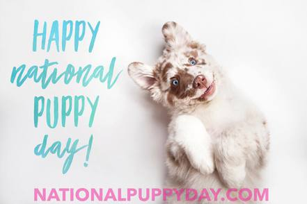 Photo source: National Puppy Day Facebook